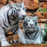 معلومات عن لغة التواصل بين الحيوانات