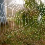 لقاحات جديدة من حرير العنكبوت لتقوية الجهاز المناعي