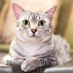 علاج الإمساك عند القطط