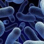 علاقة الميكروبات المعوية بظهور القلق والاكتئاب والسمنة