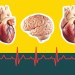 الفرق بين السكتة القلبية والجلطة الدماغية