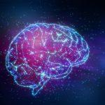 اكتشاف بروتين جديد لتحسين أداء التعلم لكبار السن