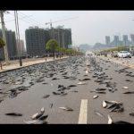 تقرير عن ظاهرة المطر السمكي