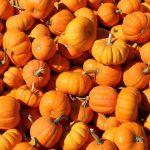 9 أنواع من الفاكهة والخضروات الصحية لفصل الخريف