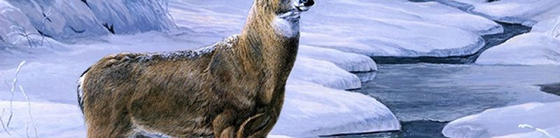 سر تغير لون عينين حيوان الرنة القطبي تغير-عيون-حيوان-الرن