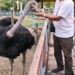 الأنشطة السياحية التي يمكن القيام بها في مدينة دافاو