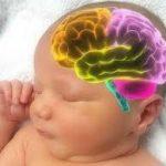 بحث عن مراحل تطور دماغ الطفل