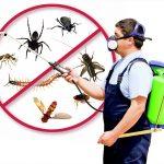 دليل أفضل شركات مكافحة الحشرات في الرياض