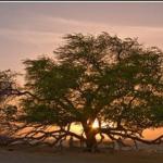 قصة عضد الدولة وسر شجرة الخروع