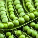 تأثير البازلاء الخضراء على الإصابة بالنقرس