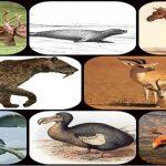حيوانات انقرضت في القرن العشرين