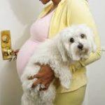 تأثير تربية الحيوانات الأليفة على الحمل