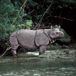 تاثير انقراض الحيوانات على البيئة