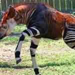 ماذا يحدث لو انقرضت الحيوانات