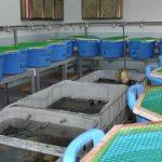 كيفية تربية الأسماك في الأحواض البلاستيك