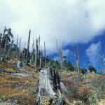 اسباب انقراض النباتات البرية
