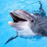 أغرب الحقائق العلمية عن الدلافين