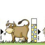 ملخص درس كيف تحصل المخلوقات الحية على الطاقة