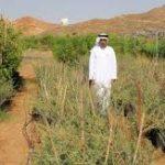 نباتات منقرضة في السعودية