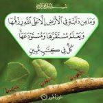 """تفسير قول الله """" وما من دابة في الارض الا على الله رزقها  """""""