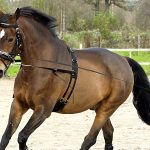 أساسيات ترويض الأحصنة للمبتدئين