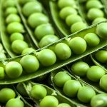 كيفية تخزين وحفظ البازلاء الخضراء في المنزل