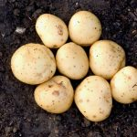 كم نسبة الكربوهيدرات في البطاطس