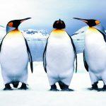 تفسير رؤية البطريق في المنام