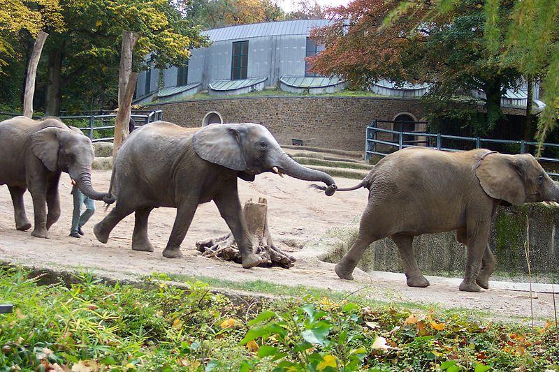 فوبرتال الالمانية حديقة-حيوان-فوبرتال.