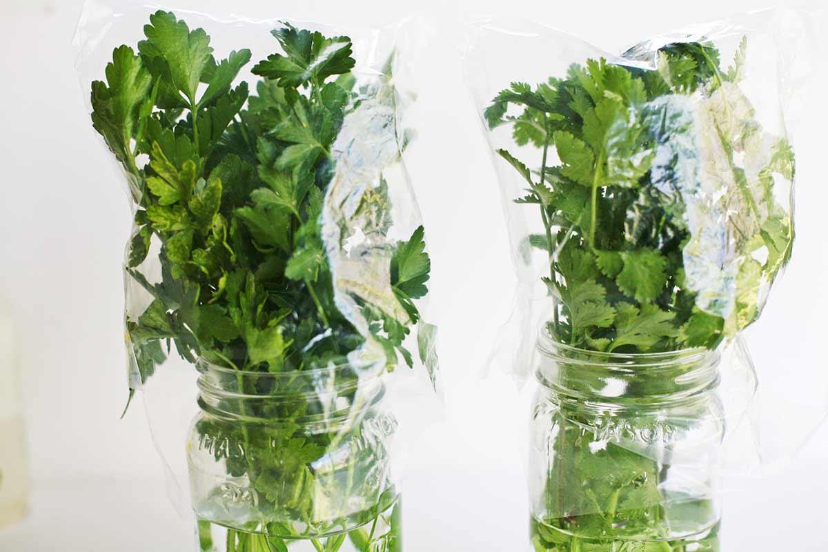نتيجة بحث الصور عن طريقة حفظ الاعشاب الخضراء لمدة طويلة بدون ثلاجه