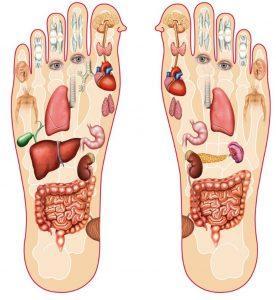 خريطة الجسم في باطن القدم المرسال