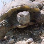 انقراض السلاحف واهميتها بالنظام البيئي