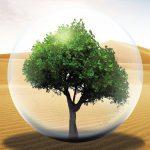 مبادرة دبي الخضراء و المبادرات التابعة لها