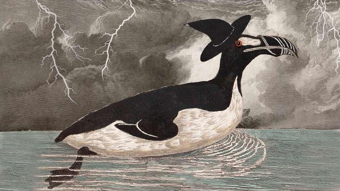 اسباب انقراض طائر الأوك