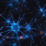 الأوعية اللمفاوية في الدماغ وسيلة جديدة لعلاج التصلب المتعدد