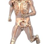 استخدام الخلايا الجذعية لعلاج الكسور