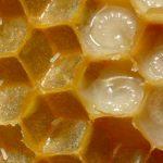 فوائد تناول غذاء ملكات النحل على الريق