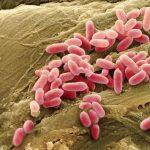 وسائل جديدة لمكافحة البكتيريا غير القابلة للقتل