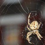 طرق فعالة لابعاد و طرد العناكب من المنزل