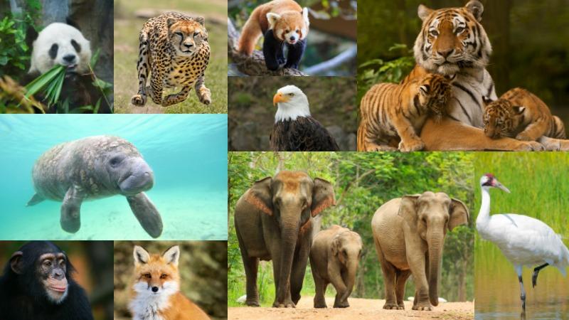 """بحث مختصر عن """" الحيوانات المنقرضة والمهددة بالانقراض ..."""