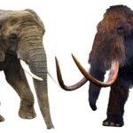الفرق بين الماموث والفيل