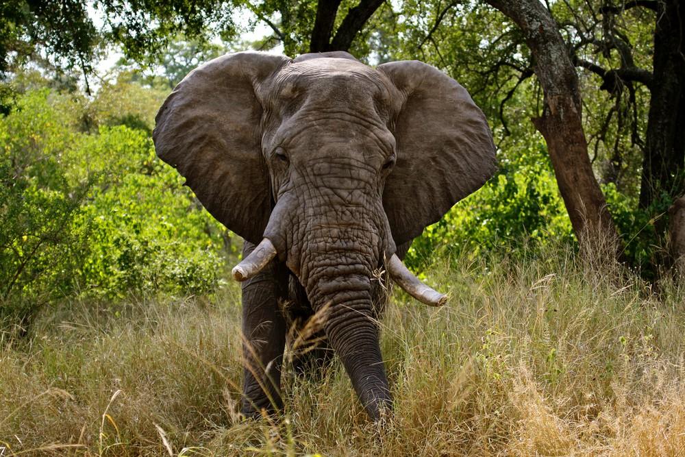 قائمة بـاكثر الحيوانات البرية المفترسة