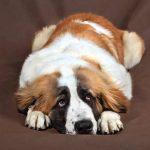اسباب نزيف الانف عند الكلاب