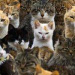 جزر تسكنها القطط في اليابان