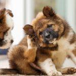 أنواع الأمراض الجلدية عند الكلاب وعلاجها
