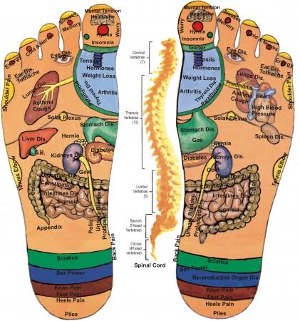 القدم خريطة جسم الانسان