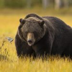 "تعرف على انواع الدببة بالصور مع "" صفاتها """
