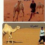 الفرق بين البدو والحضر