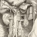 الفرق بين التهاب المثانة الخلالي والتهاب البروستاتا المزمن