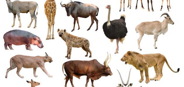 خصائص الثدييات